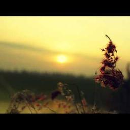 Wifey Riddim (Instrumental)